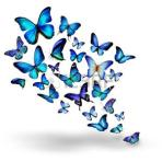 envol papillon2